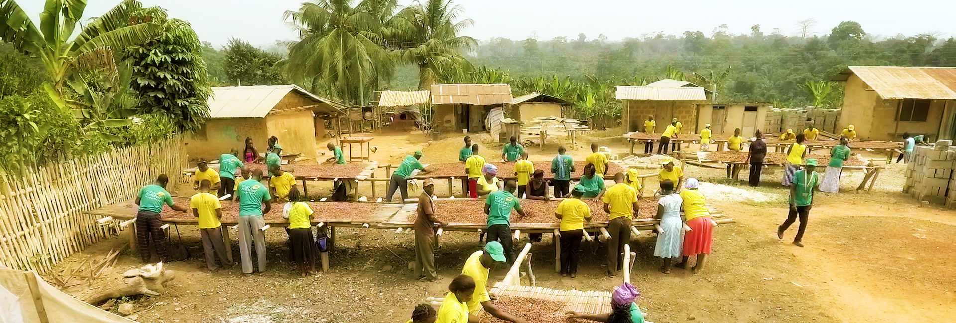 Cocoa Abrabopa Association farmers working in the village