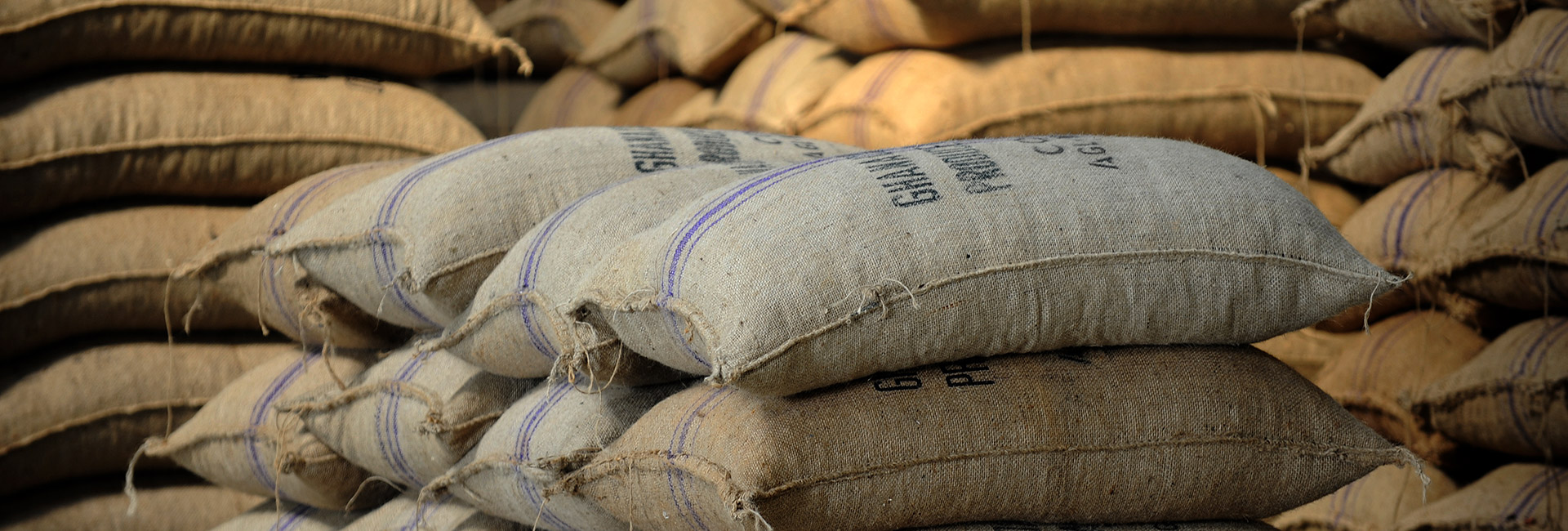 ghanaian cocoa beans in bags